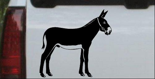 Donkey Jackass Mule