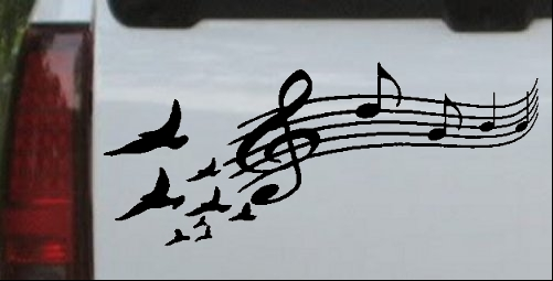 Birds to Music Scale Notes