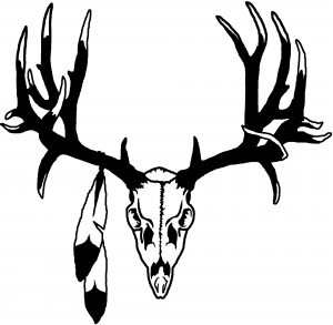 Big Buck Skull With Feathers