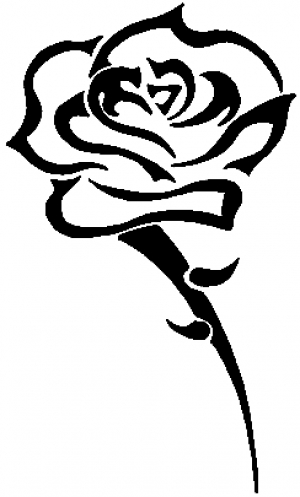 Single Open Rose