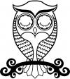 Cute Owl On Small Swirl Tree Limb